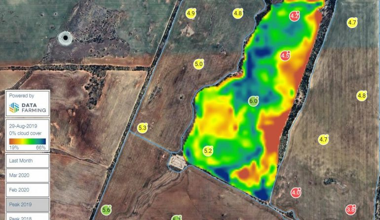 DataFarming NDVI images are now available to Summit Fertilizers clients in Western Australia   Datafarming